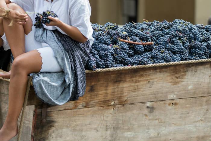 la raccolta dell'uva trasparente ed autentica