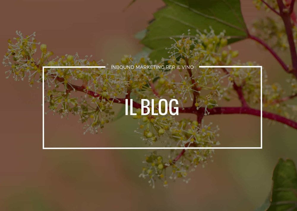 Blog e introduzione alla lead generation per una cantina vitivinicola