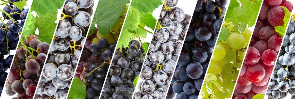 Social media marketing per un'impresa vitivinicola