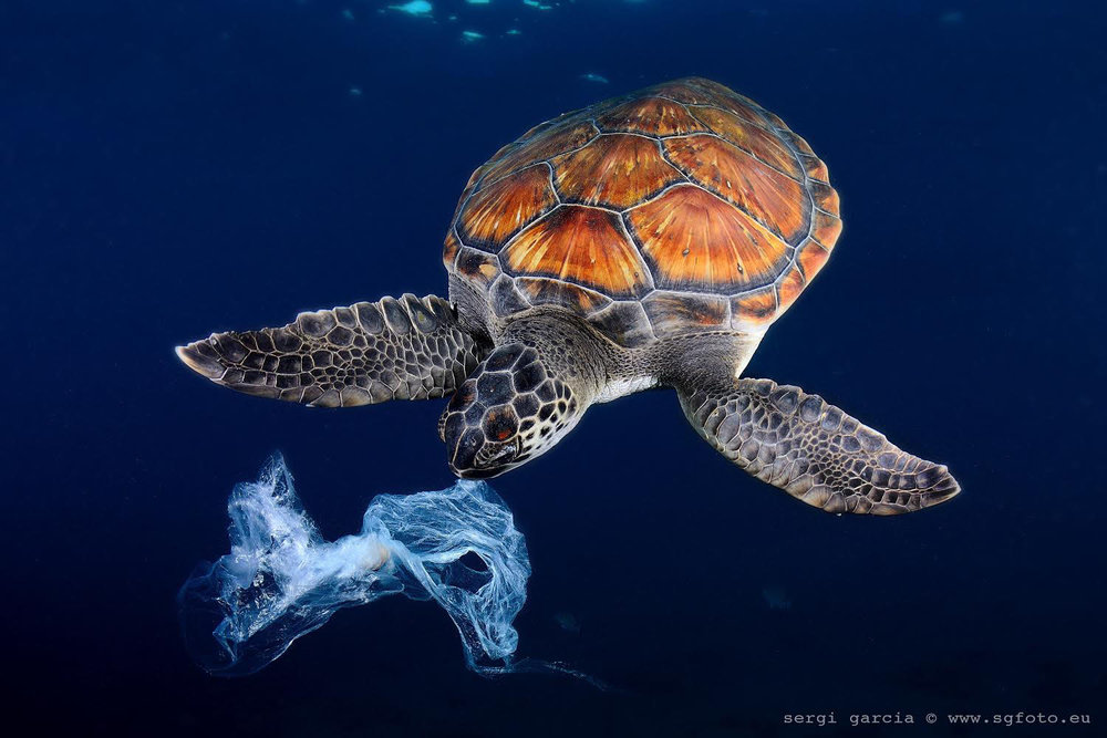 turtle-eating-plastic-bag.jpg