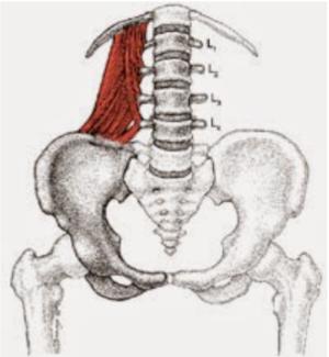 Schéma du carré des lombes