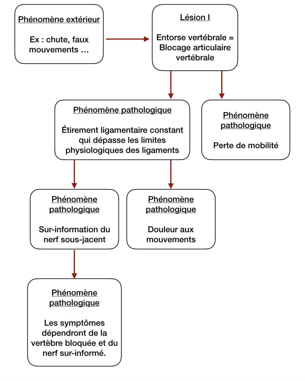 Mécanisme de l'entorse vertébrale