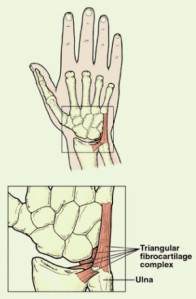 Anatomy of the Wrist — ACRO Physical Therapy & Fitness