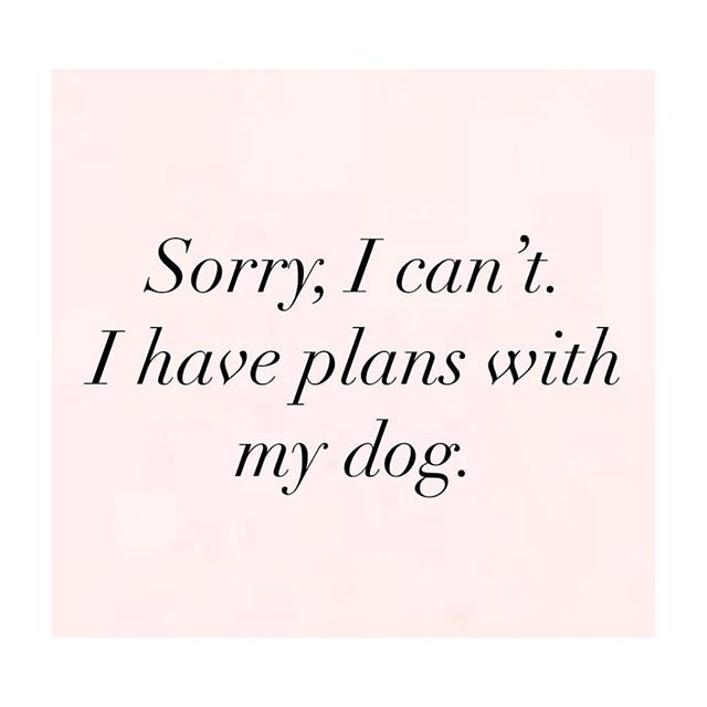 Literally me for the past two weeks 🤣 i mean she's only 9 weeks old so she definitely needs to be with her mama all day 🤷🏻‍♀️ #lightandlotus #rescuedog #adoptdontshop