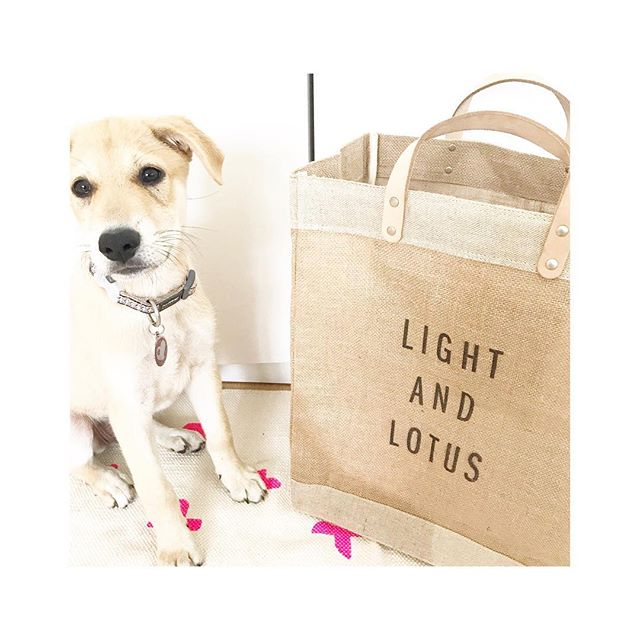 Sadie is really into my bag from @apolis 🙌🏻 she's always trying to see what i have in there! #rescuedog #adoptdontshop #lightandlotus #apolisglobalcitizen