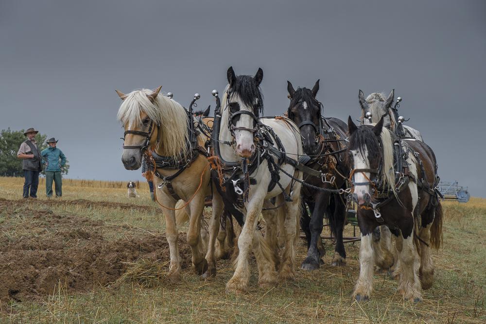 heavyhorses-1.jpg
