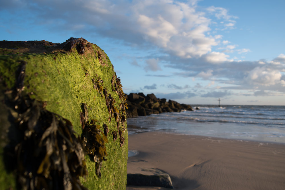 coastlines_-3.jpg
