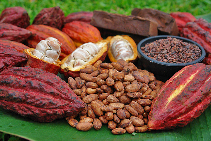 Cacao Fruit Possibilities.jpg