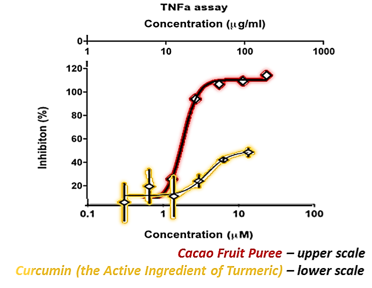 Cacao Fruit Puree is  6 - 8 times higher in antioxidant and anti-inflammatory effects when compared to   Curcumin (the active ingredient of Turmeric) and tests reveal its superfood status.