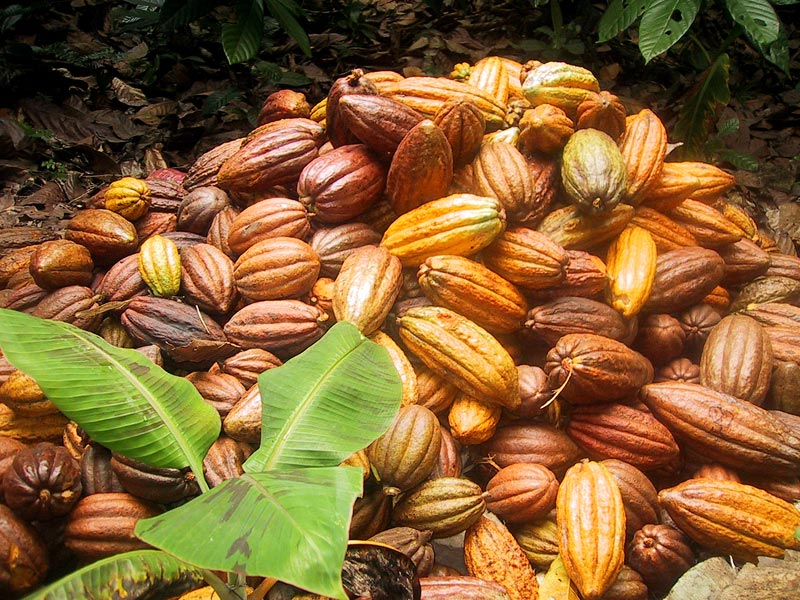 Chocolate origins: Nigeria