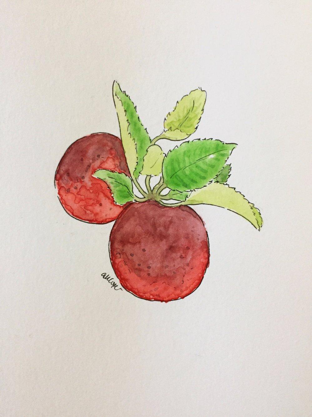 AppleWatercolor_AnnaKayArtworks.JPG