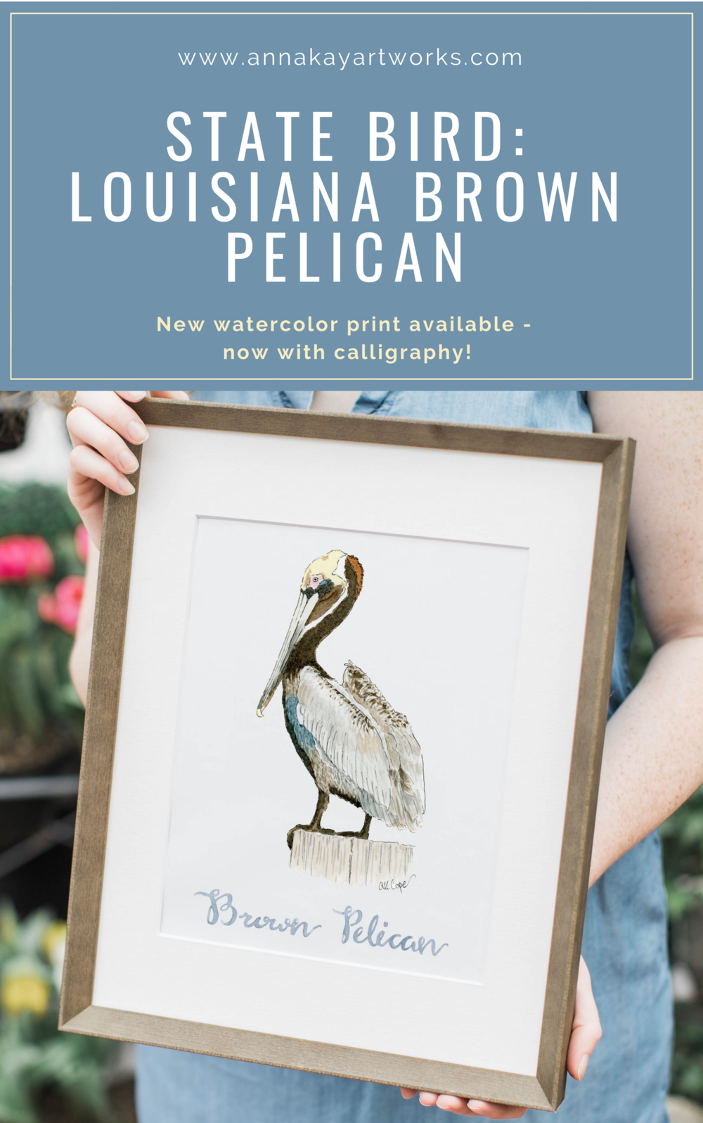Watercolor Pelican Louisiana State Bird Anna Kay Artworks