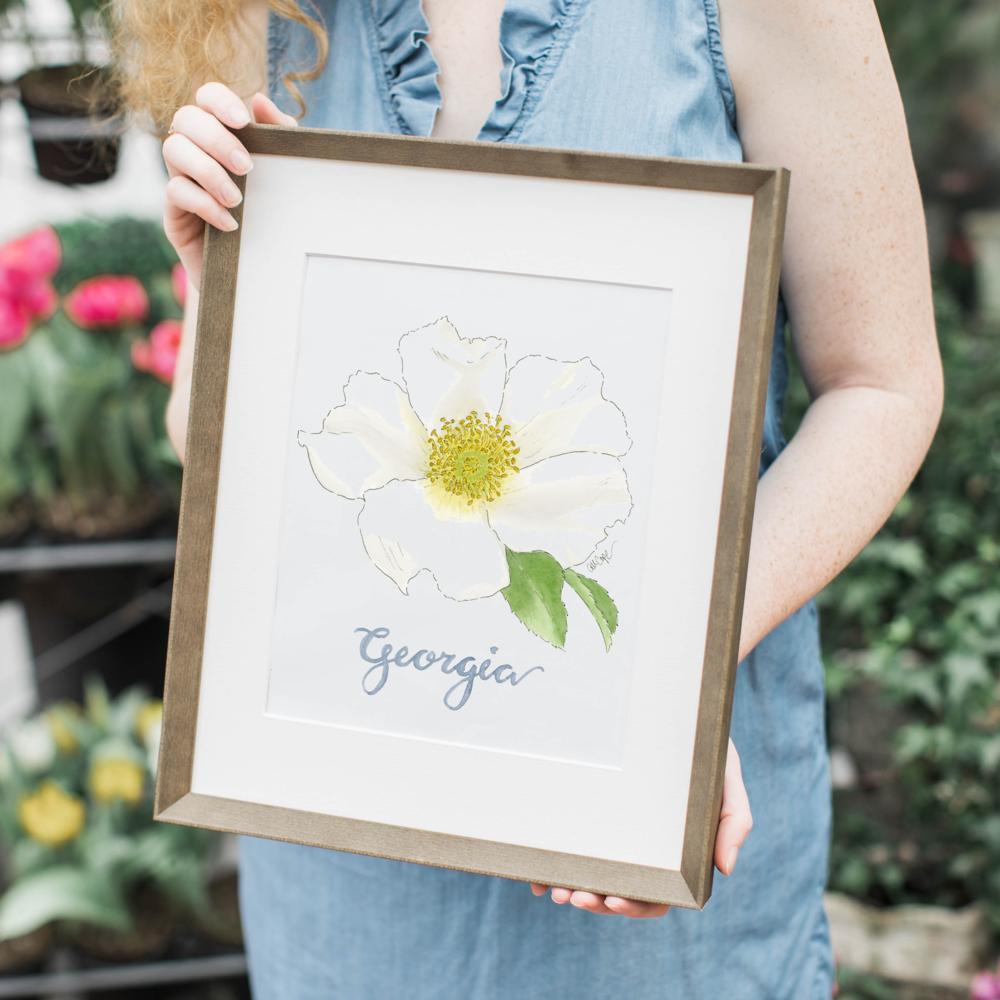 Watercolor Cherokee Rose Georgia State Flower Anna Kay Artworks