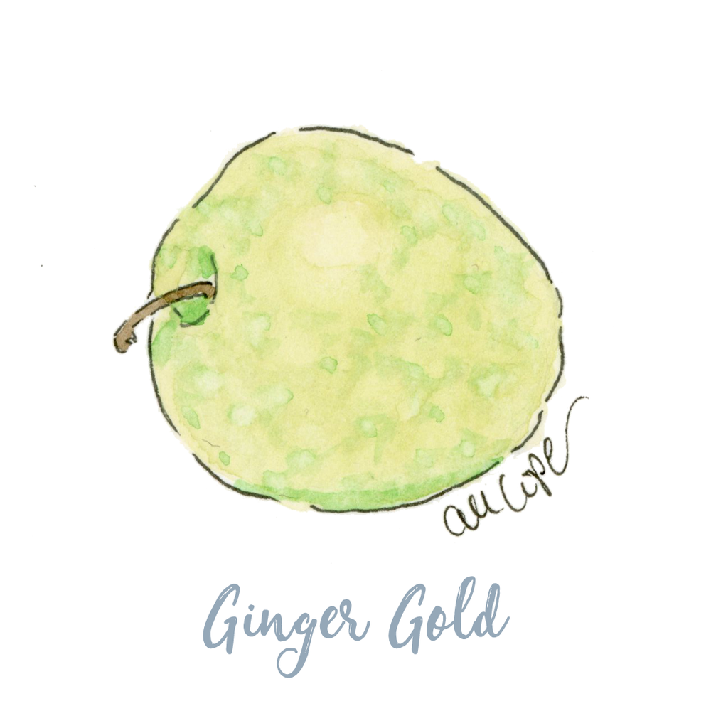 Ginger Gold.png