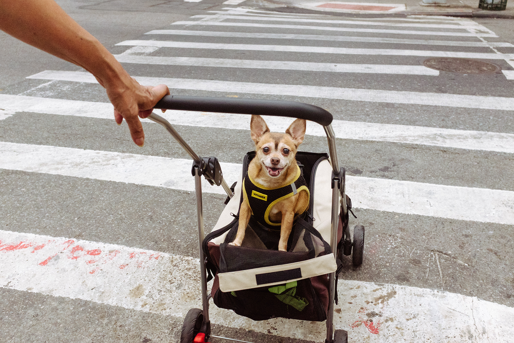 new-york-city-street-photographer-matt-anderson-6.png
