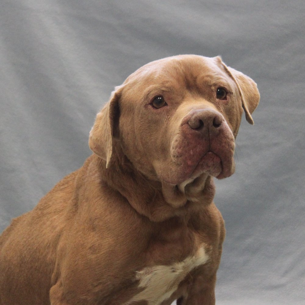 Floyd_24579 med mix breed.jpg