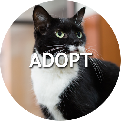 View adoptable cats and dogs