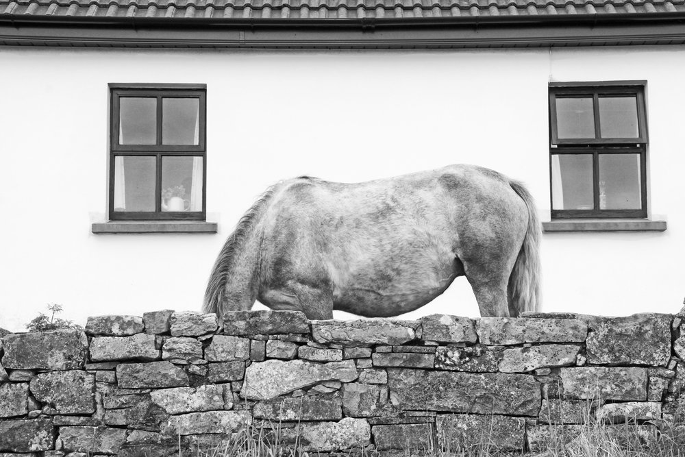 A Horse Named Grace