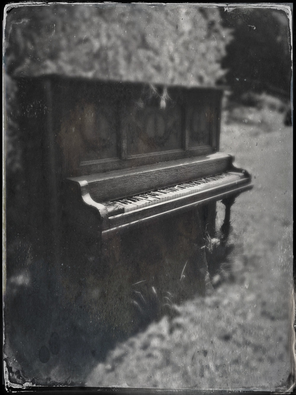 Ivories in the Valley