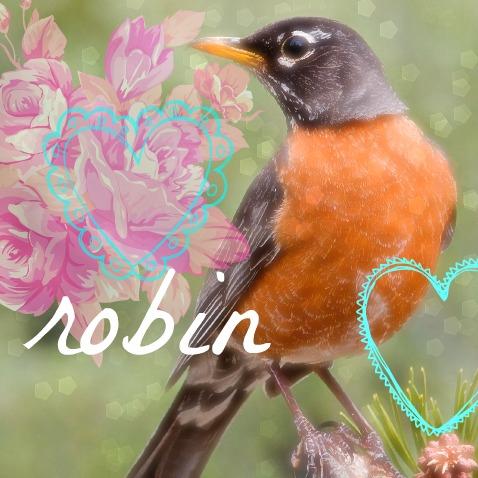 american_robin_f2.jpg