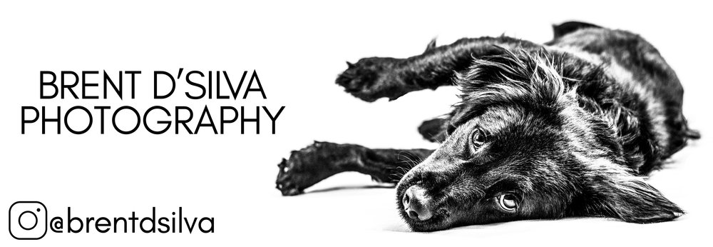 How to Take Great Photos of Your Pets - 3 Tips from a Pro