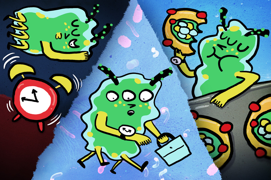 Bacteria: A day in the life