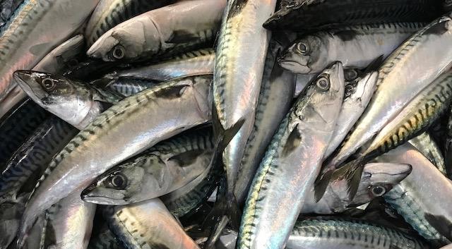 FRESH FISH 2.jpg