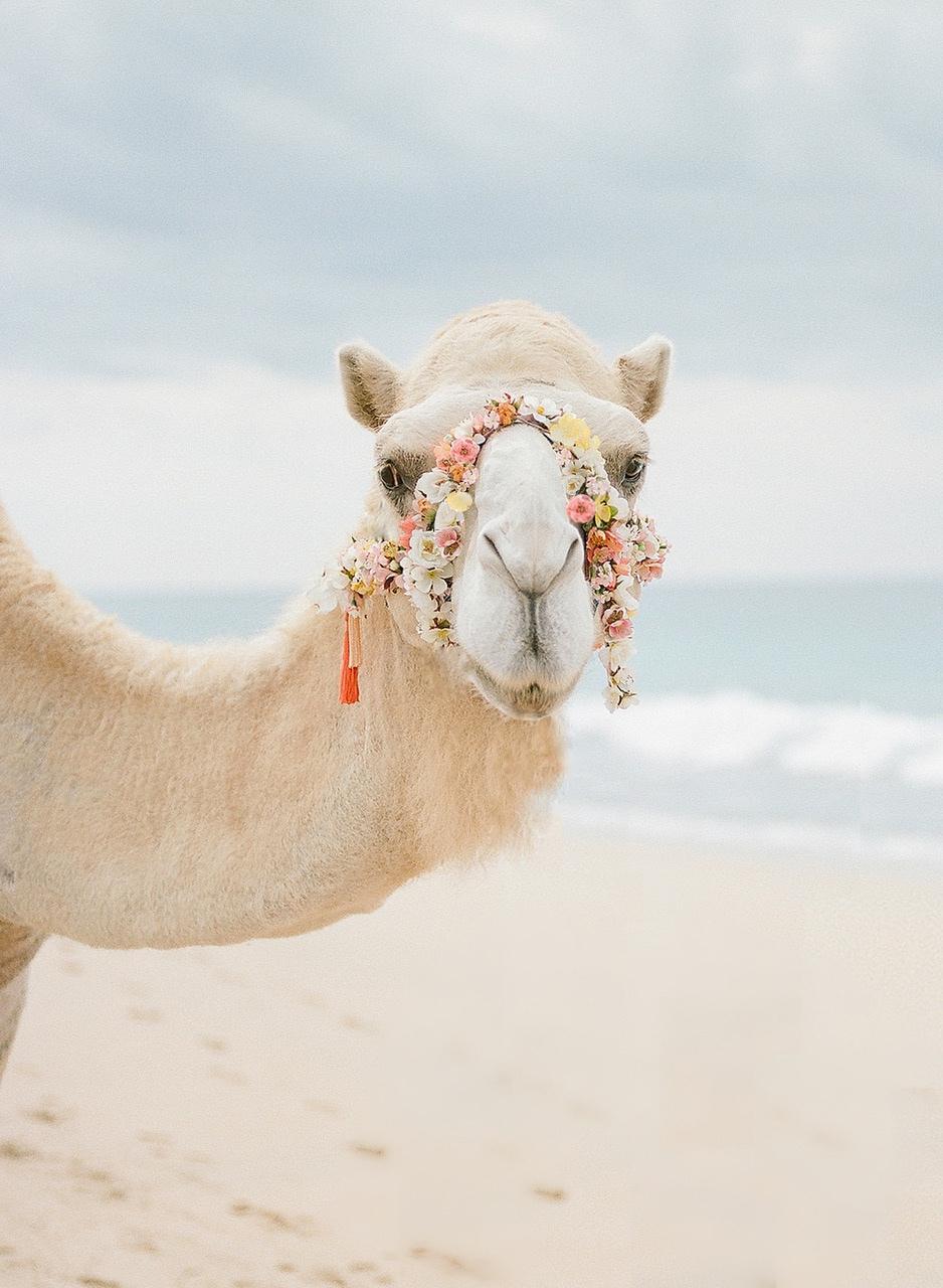 camel10.jpeg