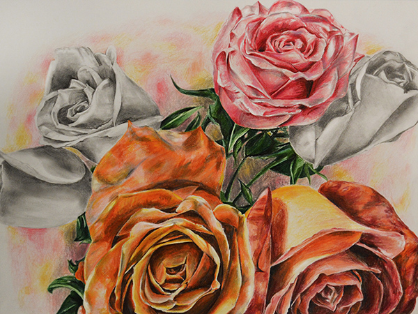 Roses , graphite and colored pencil