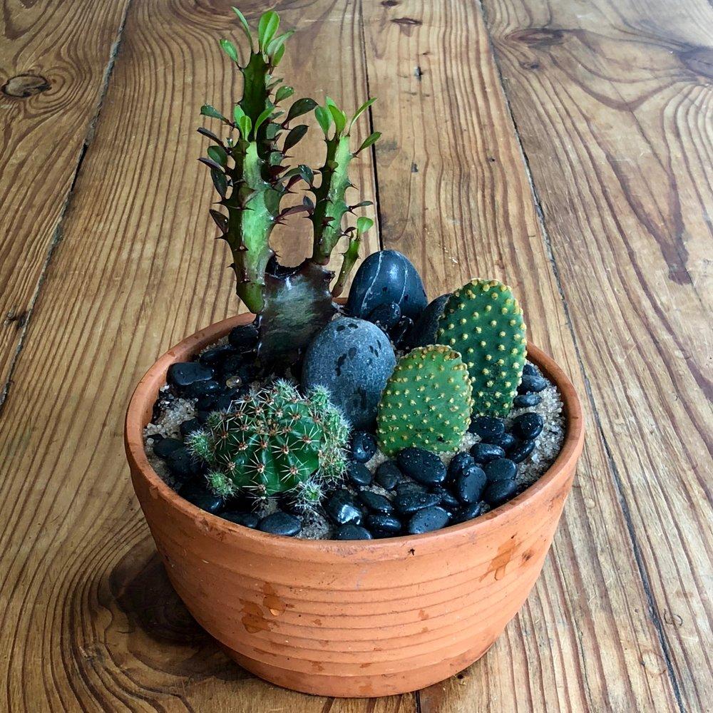 Tres Cacti $8.00.jpeg