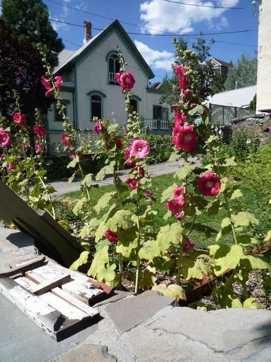 Truckee-downtown-hollyhocks-550x733.jpg