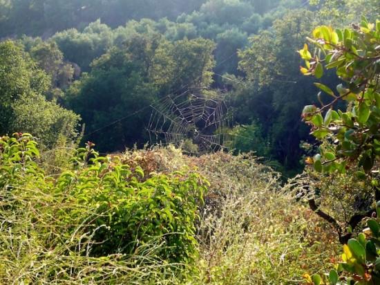 Hike-4-550x412.jpg
