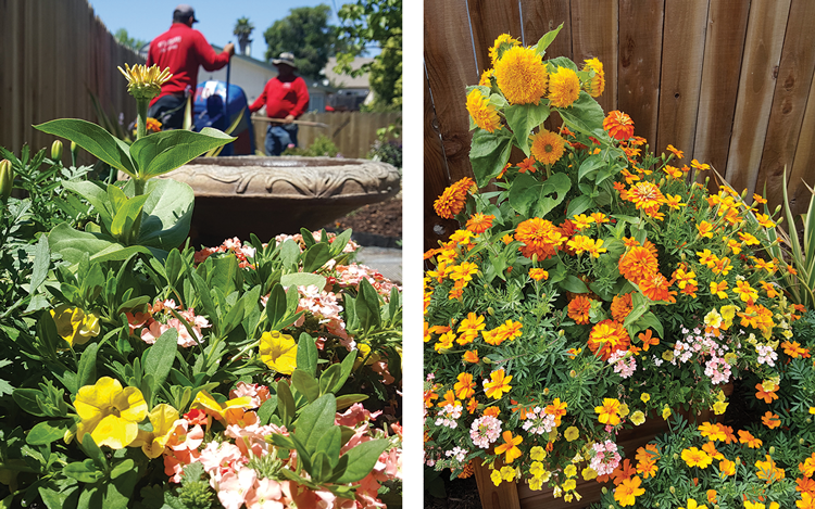 flowers   Merigolds, zinnias and verbena were combined to create a bright and warm look. Yellow calabrochea spills over the edge of the planting along with verbena. From one angle, you see mostly oranges and yellows from the landscape.
