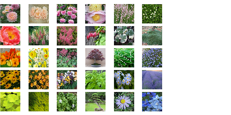 PLANT PALETTE  A plant palette document includes details and fun facts about all of the plants in the landscape.