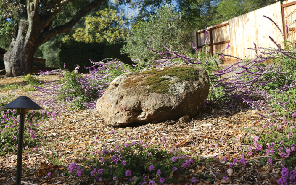 FOCAL POINT  This boulder found its way into the design mid installation. As we laid out the plants something was missing here, we needed an anchor. The story the followed was heartwarming, connecting back in time to when the house was first built. In the end this incredible field stone is now greeting visitors as they arrive.
