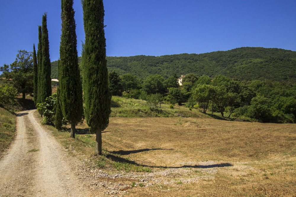 1-I-Gelsi-Farm-Scarlino-Nature-Reserve-Tuscany-For-sale-farmhouses-country-homes-in-Italy-Antonio-Russo-Real-Estate.jpg