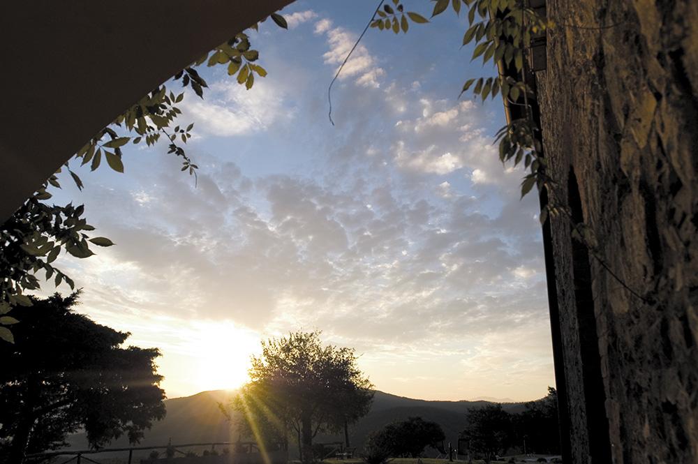 8-NEWS-Casale-Montieri-Farm-Grosseto-Tuscany-For-sale-holiday-farm-crops-Antonio-Russo-Real-Estate-Italy.jpg
