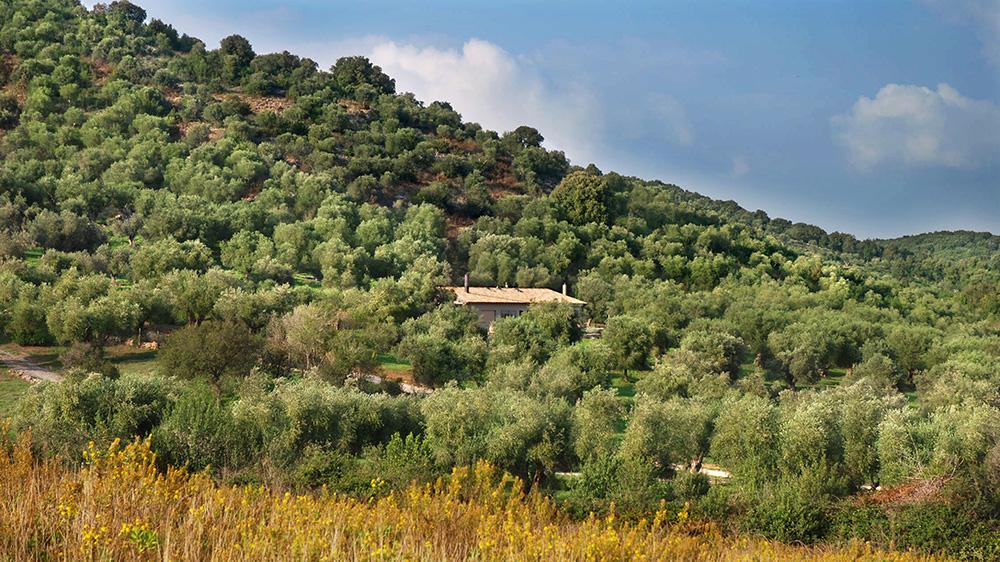 3-For-rent-luxury-villas-Italy-Antonio-Russo-Real-Estate-Villa-Capalbio-Tuscany-Maremma.jpg