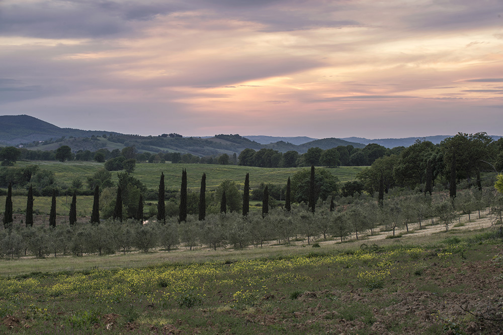 2-For-sale-luxury-holiday-farm-resort-Italy-Antonio-Russo-Real-Estate-L-Oasi-in-Maremma-Tuscany-Accommodation-Facility.jpg