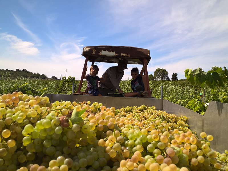 1-tuscany-wines-tasting-itineraries-antonio-russo-property-news.jpg
