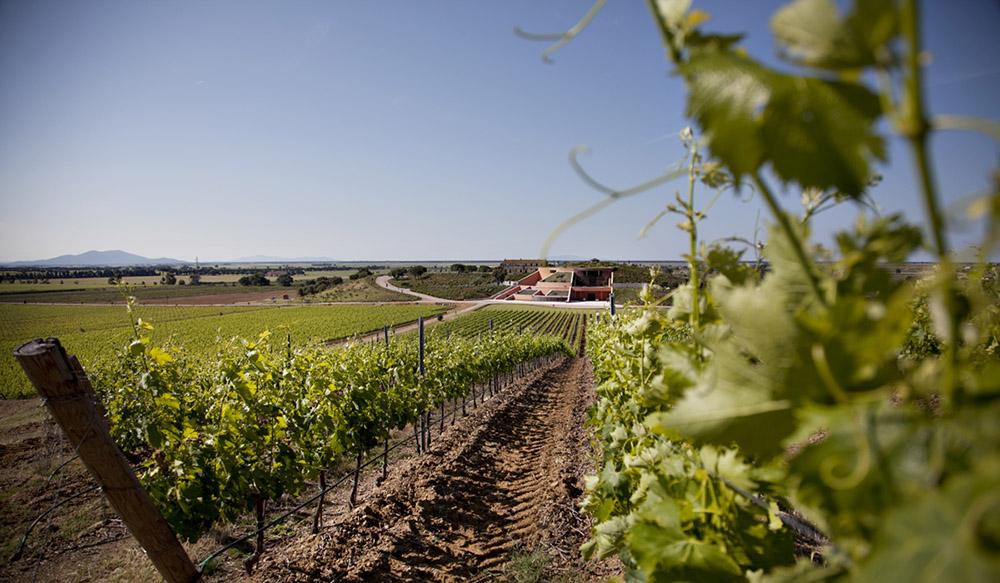 4-tuscany-wines-tasting-itineraries-antonio-russo-property-news.jpg