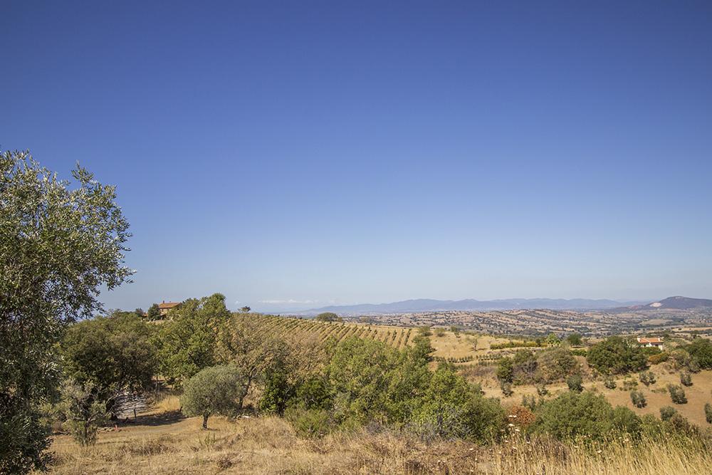 3-Casale-Il-Poggio-Farmhouse-Scansano-Montorgiali-Maremma-Tuscany-For-sale-farmhouses-country-homes-in-Italy-Antonio-Russo-Real-Estate.jpg