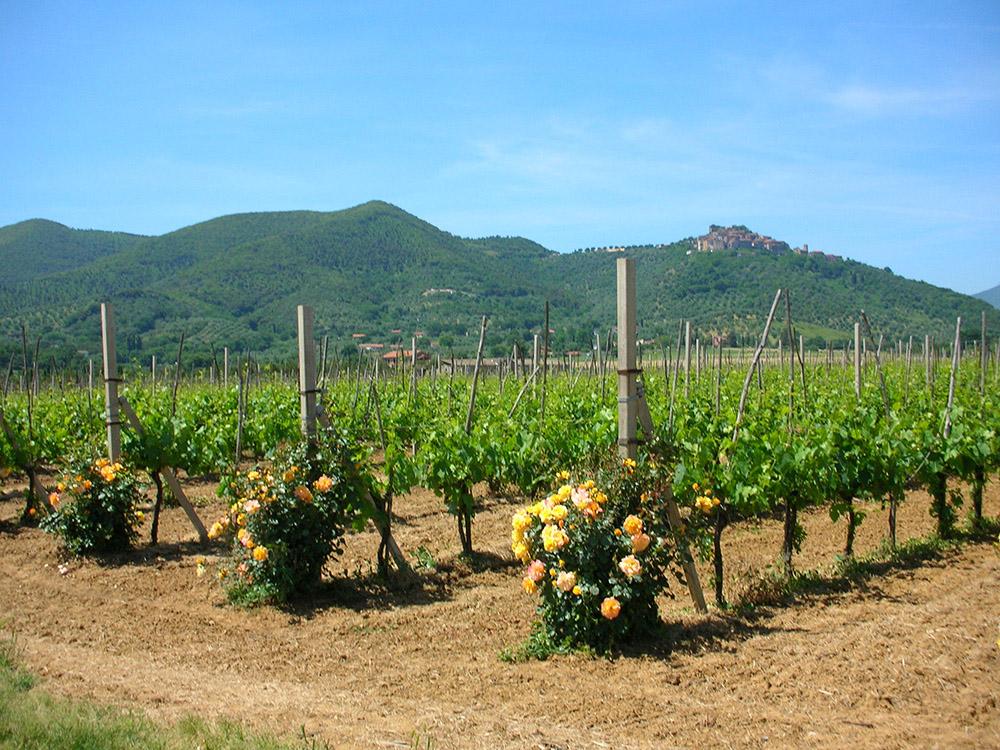 2-maremma-working-farm-for-sale-tuscany-antonio-russo-property-news.jpg