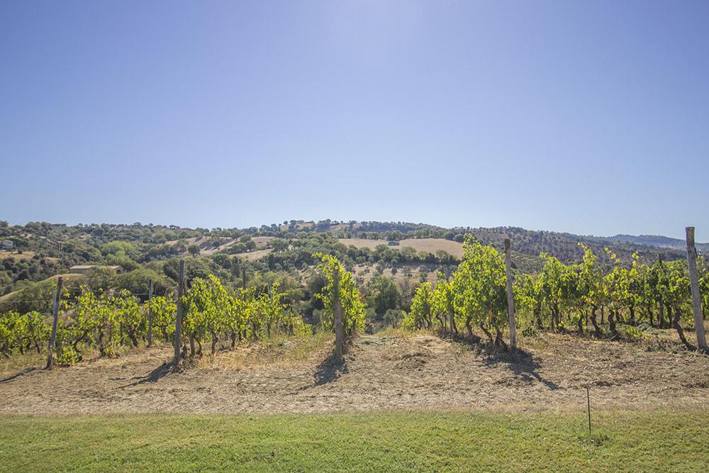 3-val-delle-vigne-farmhouse-il-morellino-working-farm-tuscany-antonio-russo-property-news.jpg