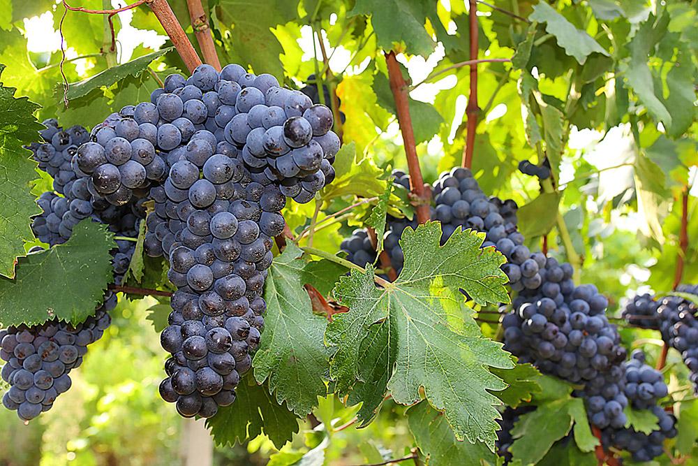 11-val-delle-vigne-farmhouse-il-morellino-working-farm-tuscany-antonio-russo-property-news.jpg