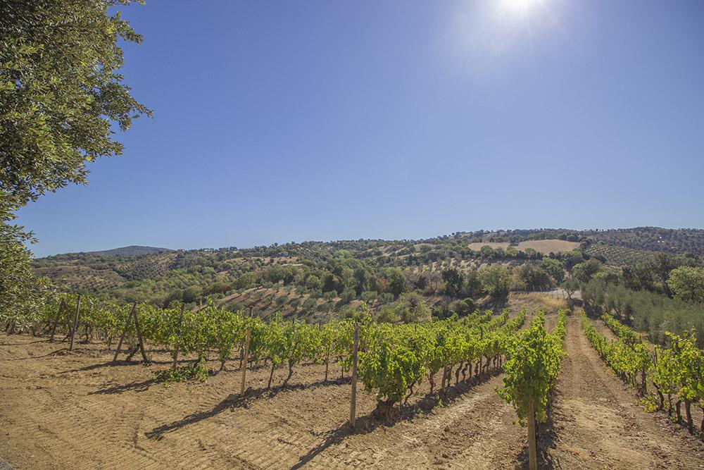 2-Working-Farm-Azienda-Agricola-Casale-Val-delle-Vigne-Scansano-Maremma-Tuscany-For-sale-farmhouses-country-homes-in-Italy-Antonio-Russo-Real-Estate.jpg