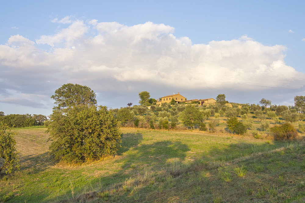 3-Working-Farm-Azienda-Agricola-Casale-Val-delle-Vigne-Scansano-Maremma-Tuscany-For-sale-farmhouses-country-homes-in-Italy-Antonio-Russo-Real-Estate.jpg