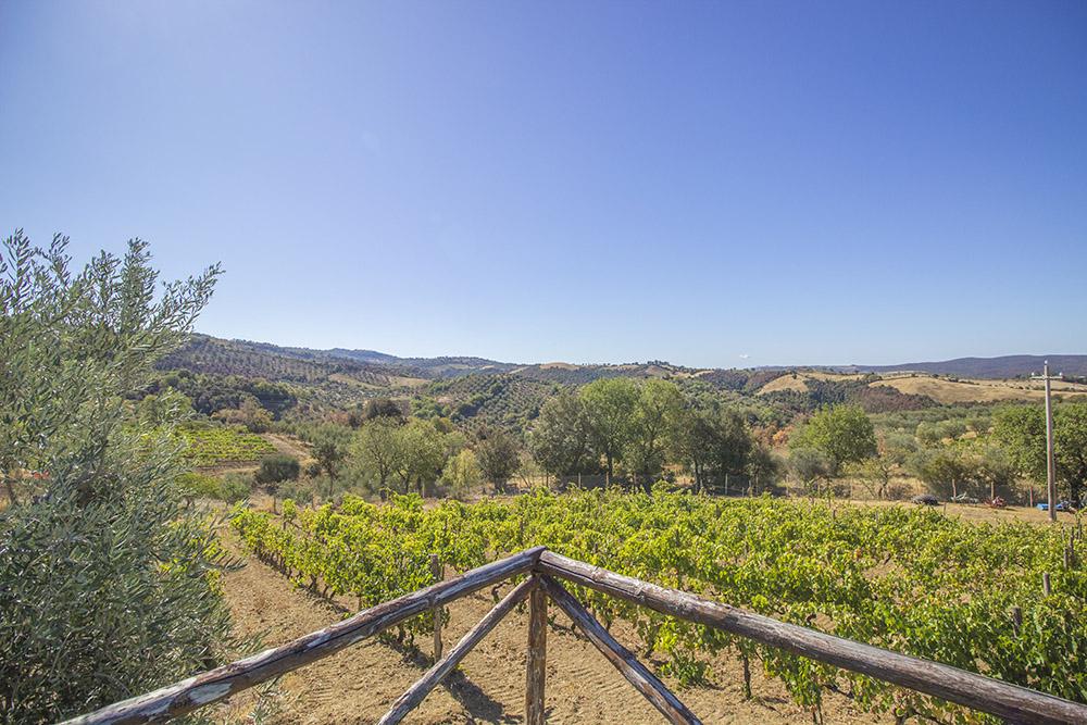 4-Working-Farm-Azienda-Agricola-Casale-Val-delle-Vigne-Scansano-Maremma-Tuscany-For-sale-farmhouses-country-homes-in-Italy-Antonio-Russo-Real-Estate.jpg