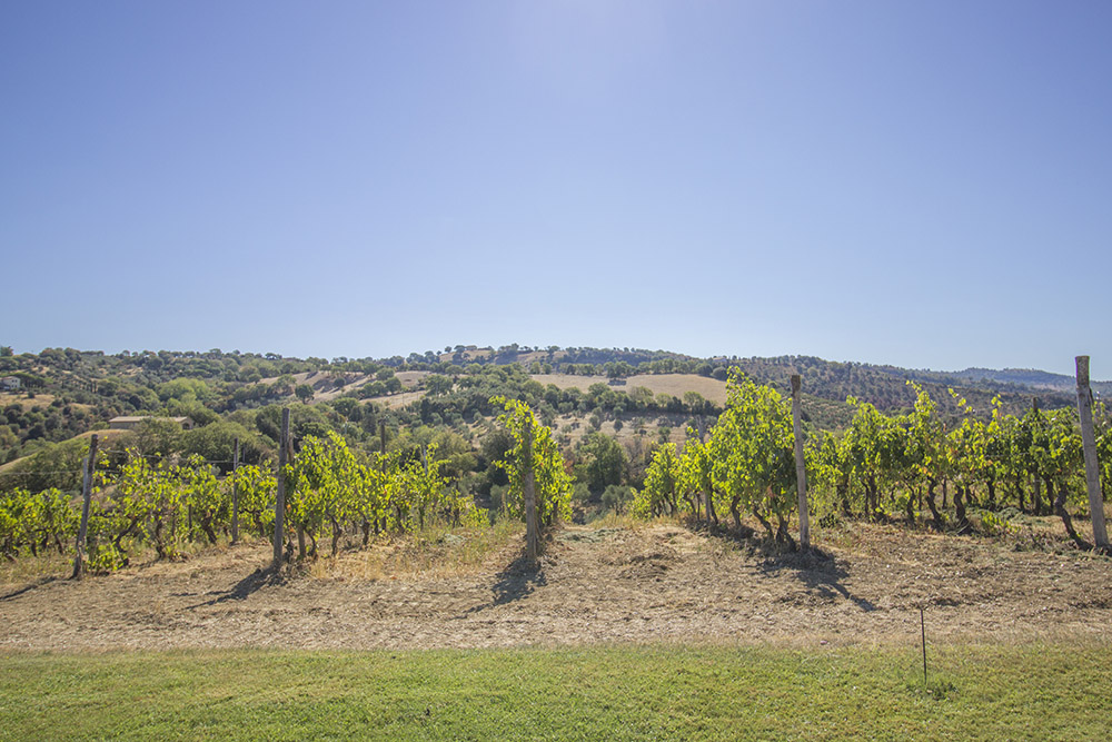 5-Working-Farm-Azienda-Agricola-Casale-Val-delle-Vigne-Scansano-Maremma-Tuscany-For-sale-farmhouses-country-homes-in-Italy-Antonio-Russo-Real-Estate.jpg