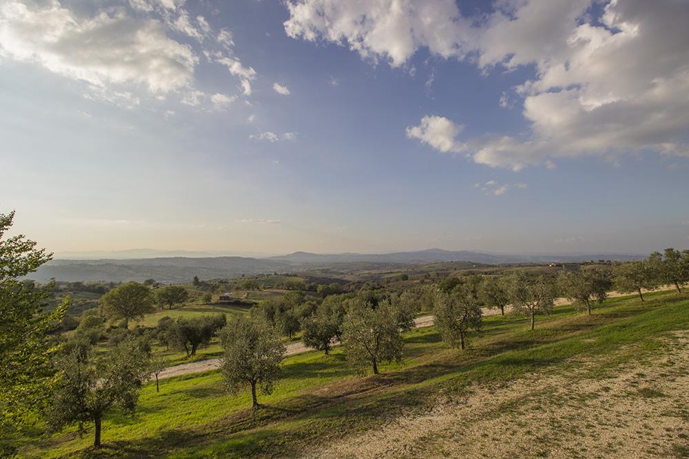 9-Working-Farm-Azienda-Agricola-Casale-Val-delle-Vigne-Scansano-Maremma-Tuscany-For-sale-farmhouses-country-homes-in-Italy-Antonio-Russo-Real-Estate.jpg
